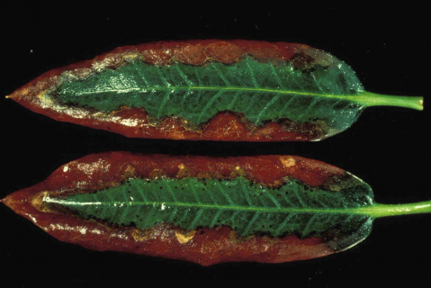 Plant Problem Diagnosis (2018-REC002)