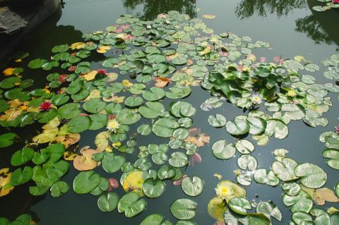 Aquatic Irrigation Pre-license Review (AQ IR PLT)