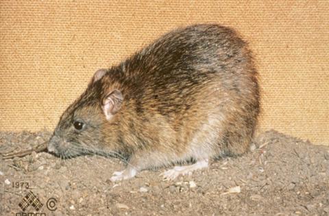 Principles of Vertebrate Pest Management (2018-REC024)