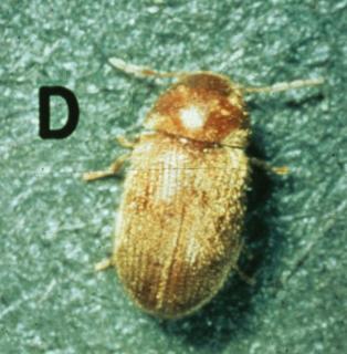The Basics: General Pests for Pest Management Professional (2018-REC018)
