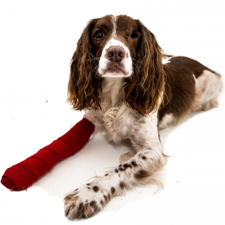 introduction to Canine First Aid