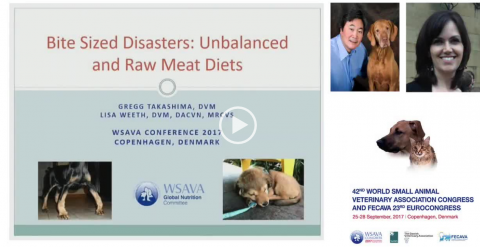 Bite Sized Disasters - Unbalanced and Raw Meat Diets