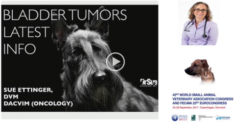 Bladder Tumours Last Info