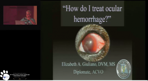 """How do I treat ocular hemorrhage?"" 2015"