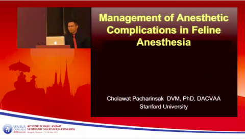 Management of Anesthetic Complications in Feline Anesthesia