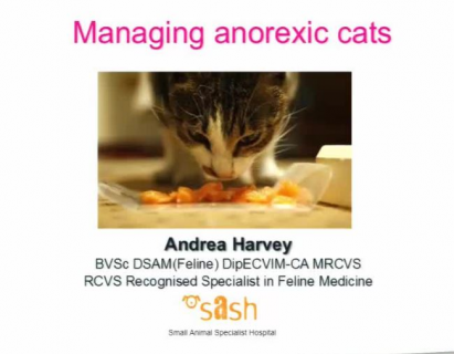Managing Anorexic Cats