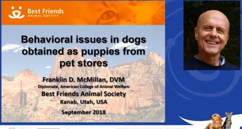Behavioral Issues In Dogs Obtained As Puppies From Pet Stores