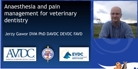 Anesthesia And Pain Management For Veterinary Dentistry