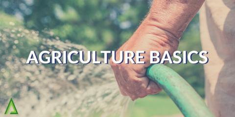 Agriculture Basics (ALD004)