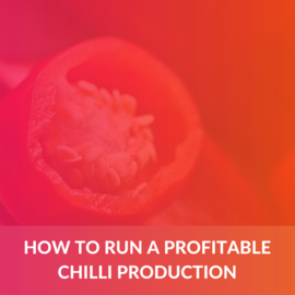 How to run a profitable Chilli production (e-book) (ALD007)