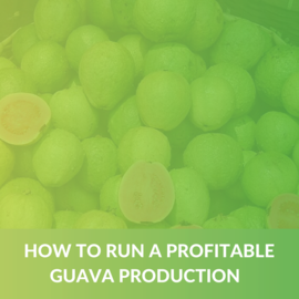 How to run a profitable Guava production (e-book) (ALD006)