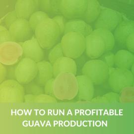 How to run a profitable Guava production (e-book) (ALD006)