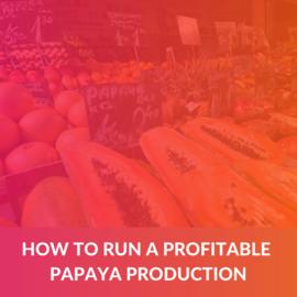 How to run a profitable Papaya Production (e-book) (ALD005)
