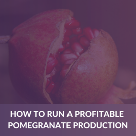 How to run a profitable pomegranate Production (e-book) (ALD001)