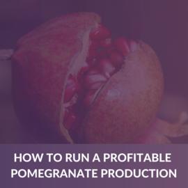 How to run a profitable pomegranate Production (e-book) (ALD001)