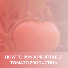How to run a profitable tomato production (e-book) (ALD008)