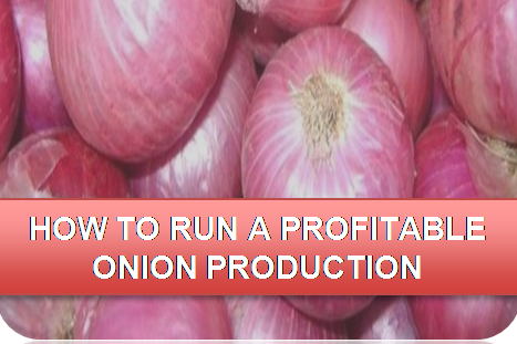 How to run a profitable Onion Production (e-book) (ALD009)
