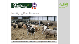 Identifying beef carcases