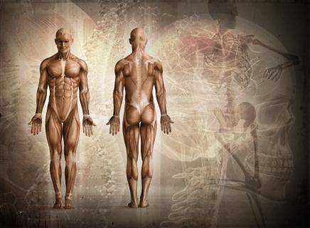 Anatomy & Physiology Level 3