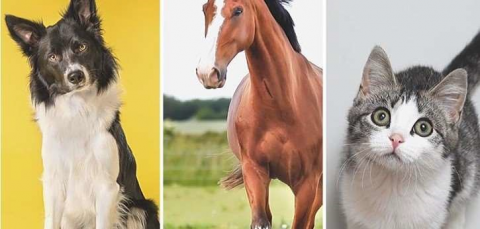 Essential Oils for Dogs,Cats and Horses