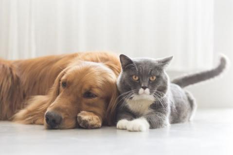 The secret to happy pets