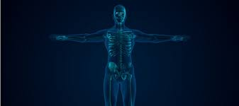 Muscular & Skeletal Systems (MSS)