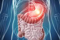 Digestive System (DIG)