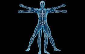Musculoskeletal, Nervous System & Special Senses (MNSS)
