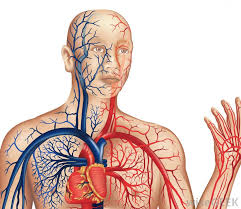 Circulatory & Respiratory Systems (CRES)