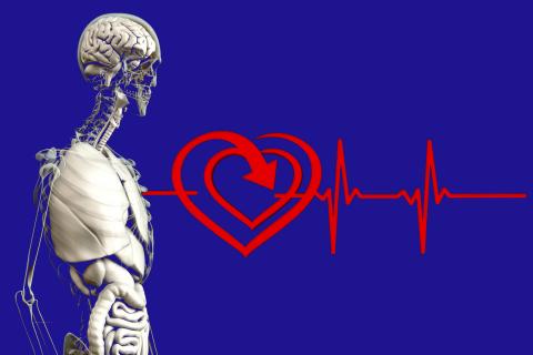 203-006 Herz-Kreislauf-System