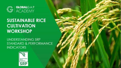 1-4 June 2021 | Understanding SRP Standard and Performance Indicators Workshop | Online (014-612)