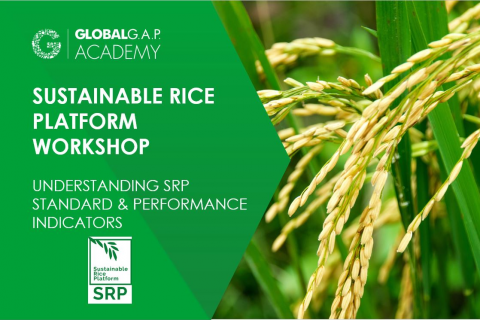 6-9 July 2021 | Understanding SRP Standard and Performance Indicators Workshop | Online (025-612)