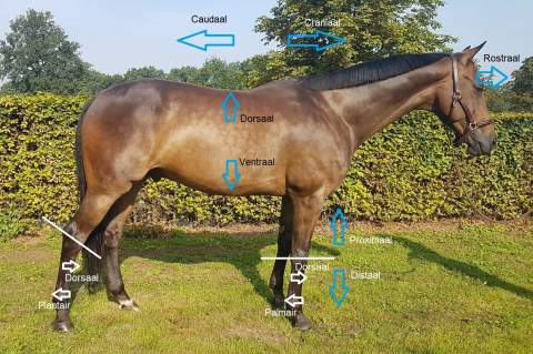 M2 the anatomy and fysiology of the horse (EHm2)