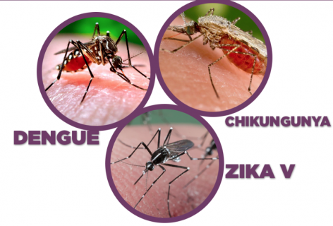 Diagnosis and Treatment of Dengue, Chikungunya & Zika (2 crédits) (IEMC-0003-O)