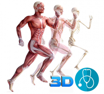 UNIT 2 - The Musculo-Skeletal System in 3D & Homeopathic  Clinical Tips (HAMSK-001)
