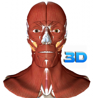 3D Anatomy & Physiology for Everyone:  The Musculo-Skeletal System (HAMSK-002)