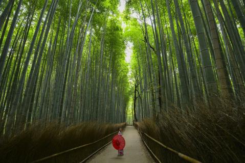 Ikigai - Your Life's Purpose