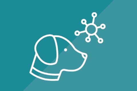 Enfermedades más comunes en Perros y Gatos (P024)