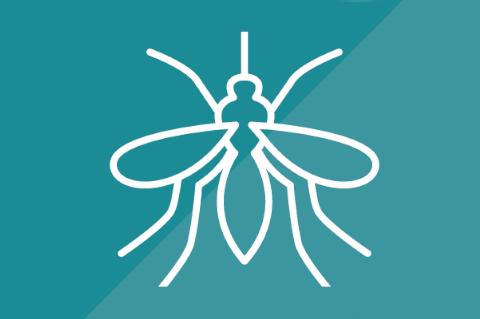 Mosquitos (U034)