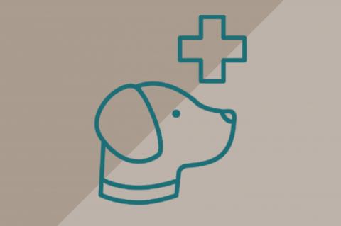 Curso de Categoría Mascotas (C12)