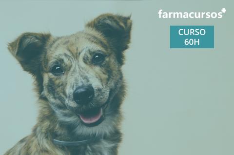 Curso de Categoría Mascotas (C12-249)