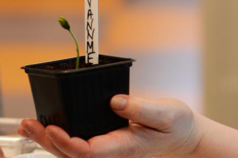 Fra frø til plante: såing og forkultur