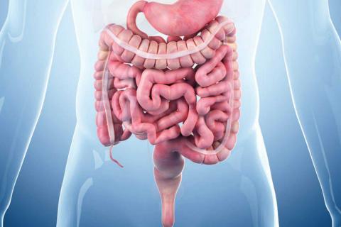El Papel de la Nutrición en la Gestión de Patologías Crónicas (NUTPATO-001)