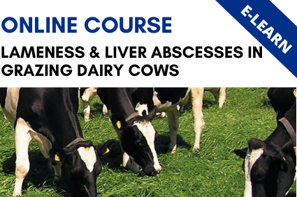 Lameness & Liver Abcesses in Grazing Dairy Cows - E-Learn