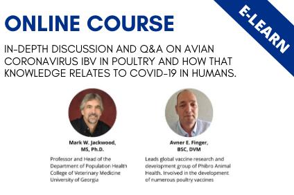 Avian Coronavirus IBV vs. COVID-19.  Similarities and Differences
