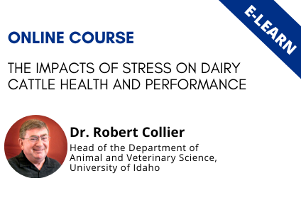 The impacts of stress on dairy cattle health and performance - E-Learn