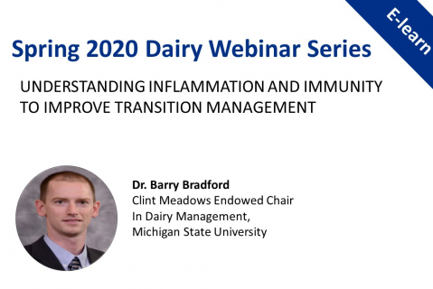 Spring Dairy Series: Understanding Inflammation & Immunity to Improve Transition Management