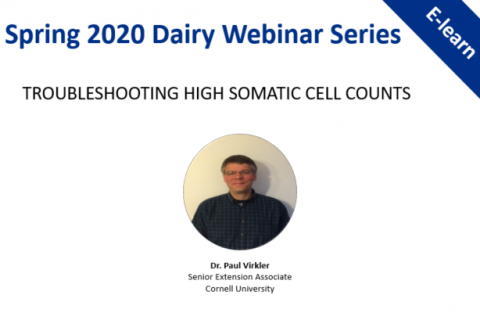 Spring 2020 Dairy Webinar Series: Troubleshooting High Somatic Cell Counts