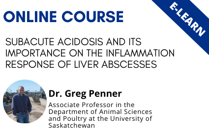 Subacute Acidosis and its Impact on the Inflammation Response of Liver Abscesses