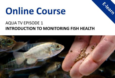 AquaTV Episode 1 - Introduction to Monitoring Fish Health